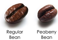 peaberry-vs-regularsm.jpg